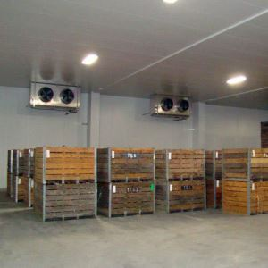 Cold Room Storage for Meat, Fish